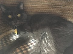 Time for the Vet Already? (sjrankin) Tags: 24august2018 edited animal cat bonkers closeup dark chigura cathouse wicker floor livingroom kitahiroshima hokkaido japan