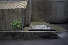 fenced plant (the tin drummer) Tags: plant fenced concrete blocks flats apartments geometry street minimal