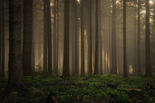 forest series #81
