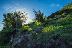 Cactus (TravelerRauni) Tags: france paysage continentsetpays nature montagne vieuxhabitants ciel nuages europe departementsdoutremer guadeloupe antilles dom fr fra sky verdure vert cloud clouds cloudy landscape