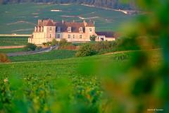 Vignes en Bourgogne (jpto_55) Tags: vigne château châteauduclosvougeot bourgogne côtedor france xe1 fuji fujifilm fujixf55200mmf3548rlmois flickrunitedaward