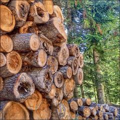 Filière bois (Charlottess) Tags: nikon5300 juillet forêt tronc bois morgon hautesalpes