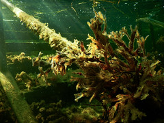 Under the sea, Ribban Malmö (Alenius) Tags: ribban ribersborg malmö snorkling snorkla dykning dyka undervatten havet