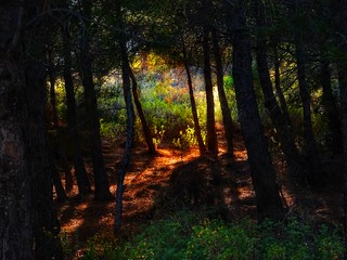 a footpath through the forest