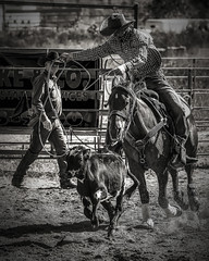 Calf Roping (digismith44) Tags: horse calf roping rodeo monochrome cowboy