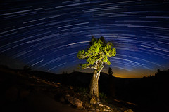 Olmstead Point Star Trails (optimalfocusphotography) Tags: northerncalifornia night usa lightpainting landscape yosemite tree astrophotography stars startrails nightphotography nationalpark yosemitenationalpark yosemitenp california nature