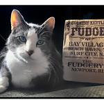 Fudge thumbnail