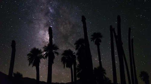 Milky Way and Palm Trees In the Wind at Corn Springs