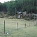 A distant kangaroo!