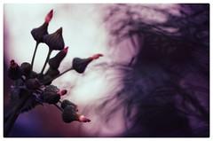 Innehalten...Herzklopfen...Seelenfrieden (***étoile filante***) Tags: pentax ruhe stille silence calm poetic emotions light licht dark dunkel bright hell leuchten nature natur creative bokeh bokehlicious structure struktur tree baum plant pflanze