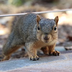 99/365/3751 (September 18, 2018) - Squirrels in Ann Arbor at the University of Michigan on September 18th, 2018 thumbnail