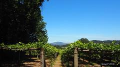 Viñedos en el Pazo de Quinteiro da Cruz. (lumog37) Tags: vino vineyard viñedo paisaje landscape uva wine grapes
