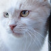 Curious cat (bolex.ua) Tags: cat light white look eyes reflection animal