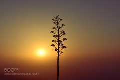 Alone in the Sky (tycampbe) Tags: ifttt 500px background wallpaper nature sky flower sun sunset bokeh photography popular time abstract scene beautiful alaska plants macro zoom story concept discover nobody dark evening perfect universe