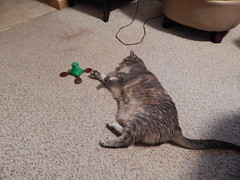 DSCN3225 (mestes76) Tags: 100617 duluth minnesota cats pets fetty fettucini cattoys butterflies playing