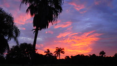 Tropical Sunrise (Jim Mullhaupt) Tags: sunrise sunup dawn sun morning sky clouds color red orange pink yellow blue tree palm silhouette weather tropical exotic wallpaper landscape bradenton florida manateecounty nikon coolpix p900 jimmullhaupt cloudsstormssunsetssunrises photo flickr geographic picture pictures camera snapshot photography nikoncoolpixp900 nikonp900 coolpixp900