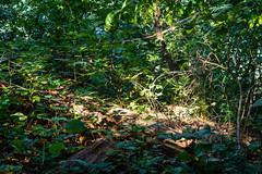 Sunlight on forest floor! (Jakesb_001.NEF) Tags: forest sunlight floor green nikon d7100 nikkor