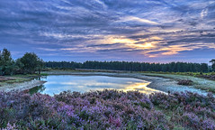 Heather And Clouds (nicklucas2) Tags: landscape newforest pond slufters reflection heather cloud tree water