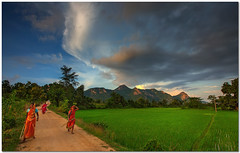 country roads take me home... (Soumya Bandyopadhyay) Tags: westbengal purulia ajodhyahills sunset dusk clouds monsoon tribal women countryside village rural paddyfield farmland landscape panoramic horizontal wide canoneos5dmk3 canon1635mmf28l