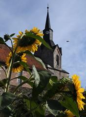 (:Linda:) Tags: germany thuringia village bürden sunflower church spire clock bee