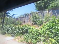 IMG_8297 (Andy E. Nystrom) Tags: bellevue washington wa bellevuewashington