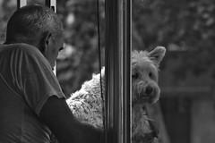 A él le gustaba verla mientras ella estaba distraída. A ella le gustaba sentir su mirada, y fingír que no se daba cuenta. (elena m.d.) Tags: 2018 nikon d5600 sigma sigma105 monocromo tula elena bw bn new street callejera