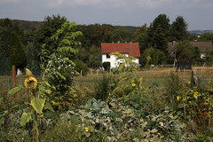 My garden (XXX) (dididumm) Tags: latesummer summer garden flowers sunflowers vegetables herbs growing green grün wachsen kräuter gemüse sonnenblumen blumen spätsommer sommer garten