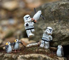 This isn't the Porg you're looking for (Jezbags) Tags: porg stormtrooper stormtroopers trooper troopers porgs lego legos toy toys blackseries macro macrophotography macrodreams macrolego canon canon80d 80d 100mm closeup upclose