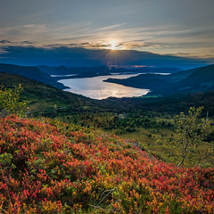 The heather dress up for autumn (bogroa) Tags: heather sunset colours autumn water fjord peace calm purepoint pure clean norway view mountain