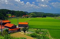 Rice and orange roof tiles, Mine, Yamaguchi  山口県 美祢市 (Anaguma) Tags: japan chugoku yamaguchi rice paddy roofs