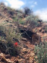 Padma (emdot) Tags: ghostranch newmexico highdesert kitchenmesatrail hike trail