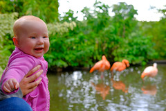 Molly and flamingoes (timnutt) Tags: molly flamingo northamptonshire baby birds 35f2wr midlands 35mm fujifilm garden xt2 child lake water gardens fuji pond animals cotonmanor flamingoes manor people