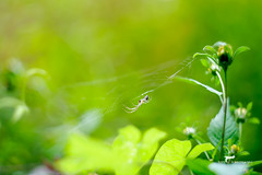 DSC_7767 (tom.kaszewski) Tags: babielato helios442 las macro natura przyroda łąck pająk spider