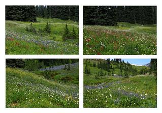 Mt Rainier Wildflower Collage