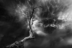 Ambition .. (tchakladerphotography) Tags: blackwhite bw fineart concept tree sky clouds mood composition