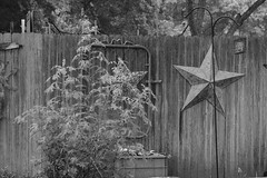 No Birds Rain Day (Gene Ellison) Tags: garden shrubs plants fence birdfeeder shepherdshook rain drops blackwhitephotos