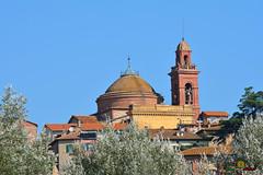 A-LUR_7242 (OrNeSsInA) Tags: trasimeno umbria italia toscana lago nature tuscany rettile