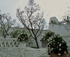 450 - Le paradis blanc (AnouchkA_) Tags: anouchka cadaques spain travel costabrava costa brava dali casamuseusalvadordali casa museu salvador white garden flower tree peacefull 450