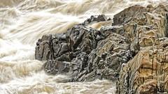 Great Falls Virginia (oscarpetefan) Tags: oscarpetefan greatfalls virginia d500 nikon sigma 150600mmf563dgoshsm sport meetup shutterbugexcursions dxo11 on1pics on1photoraw dx potomac river