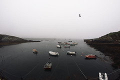 That's been stomped away from every single dream (Seiko Cat's) Tags: ouessant port oiseau mer bateaux boat bird sea bretagne lampaul fog mist brouillard breizh marin cotes