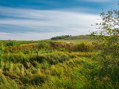 ferintosh 001 (adamlucienroy) Tags: ferintosh camrose wetaskiwin edmonton alberta canada rural town landscape summer fall seasons pastoral fineart art panasonic lumix lumixg9 g9 1235mm f28
