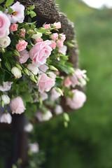 Wedding Flowers (James Mans) Tags: nikon d5500 flowers flower wedding polhawn fort cornwall torpoint marriage bride groom bloom macro pink roses