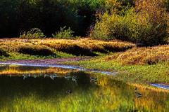 Morning Pond (docoverachiever) Tags: pond autumn digitalart oregon hss reflection nature water birds willamettevalley digitalpainting wetlands landscape ankenywildliferefuge scenery