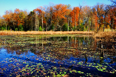 Fall Marsh (Tim Pohlhaus) Tags: saltwater marsh wetland chesapeake bay grasses water landscape park baltimore county maryland fall