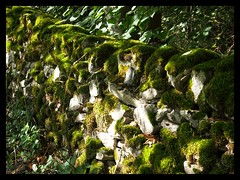Dry stone wall with moss (Develew) Tags: limestonewall limestone moss drystonewall lathkilldale alport derbyshire derbyshiredales peakdistrict peakdistrictnationalpark lightandshade england countryside ruralscene rural farming agriculture walkinglandscape footpath lines leadinglines squares greenandwhite abstractpatterns dappledshade deepdof lichen leaves shrubbery