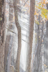 Thawing Forest (Maddog Murph) Tags: snow fall tree forest sun ray fine art nature folliage lightrays rays beam beams winter snowy scene landscape photography photo bark falling cascade thaw thawing winterscape