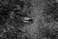 Small Fishing Pier (Gene Ellison) Tags: pier pond trees shrubs naturepark blackwhitephotos