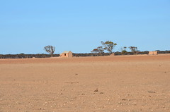 DSC_8931 abandoned farm in drought, 400m southeast Border Road, Sutherlands, South Australia (johnjennings995) Tags: farm abandoned sutherlands southaustralia australia drought