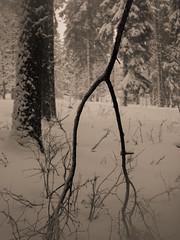 Vercors, 2018 (Olivier BERTRAND) Tags: vercors blackandwhite blackandwhitephotography digitalphotography neige forest forêt hiver isère landscape lumix25mm lumix noiretblanc nature naturallight olivierbertrand olympusem5markii winter woods hybridcamera 25mm panasoniclumix25mm