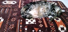 Tigger's Favorite Resting Spot (sjrankin) Tags: 1september2018 edited animal cat kitahiroshima hokkaido japan tigger floor mat tummy belly rest sleep livingroom